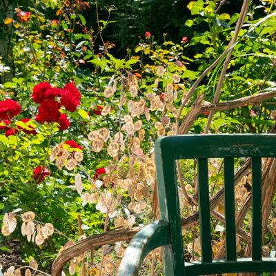 Grüner Garten mit Rosen und Vintage-Stuhl