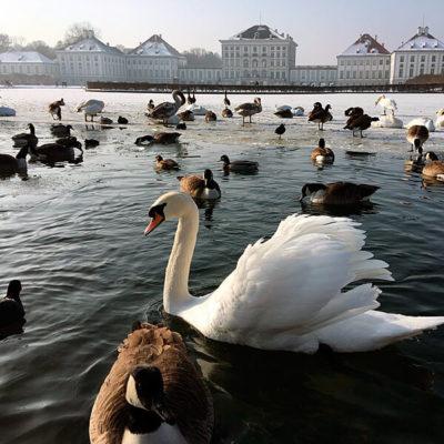 Nymphenburger Schloss in München. Malerische Winteransicht vom gefrorenen Teich mit Wasservögeln im Vordergrund.